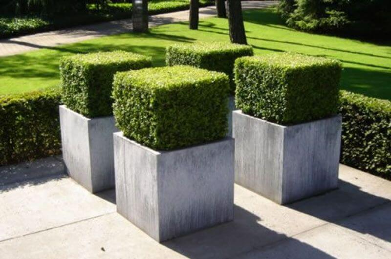 English Box is ideal for all forms of topiary