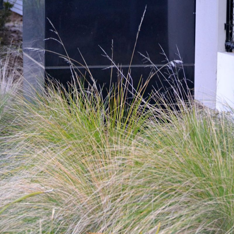 Tussock Grass looks great against modern architecture